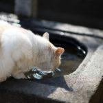 目つきの悪い白猫を追跡してみた
