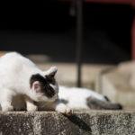 85mmの単焦点レンズは程よい焦点距離で猫フォト撮影と相性よし