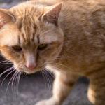 焦点距離50mmの単焦点レンズで猫の撮影に挑戦