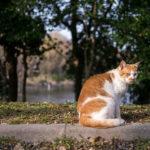 山田池公園には猫がたくさんでもう我慢できない