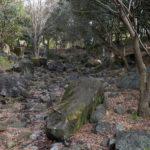 山田池公園は花と緑に囲まれた最強の癒しスポット