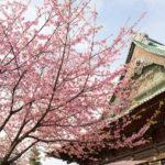 護国寺の桜が満開!買ってよかったAF-S NIKKOR 35mm f/1.8G ED