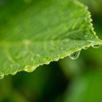 雨上がりはマクロレンズで水滴の写真撮影に挑戦