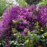 強羅公園の温室!色鮮やかな花を汗だくになりながら撮影