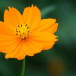 LUMIX G VARIO 14-140mm/F3.5-5.6で夏の野花を撮影してきた