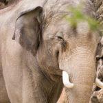 望遠レンズをフル活用!上野動物園で動物たちの表情にズームイン