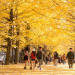 昭和記念公園の銀杏並木はまさに黄色い絨毯!一度は見にく価値アリ