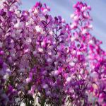 春の野花を近所を散歩しながら撮影