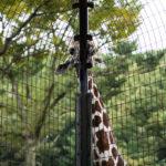 多摩動物公園は子どもも大人も楽しめて家族のお出かけにサイコー