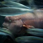 池袋のサンシャイン水族館へ家族でお出かけ!魚やペンギンを夢中で撮影