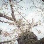 春の花はいろんなことを思い出させてくれる