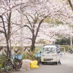 五反田の桜がこれでもかと言わんばかりの満開ぶり