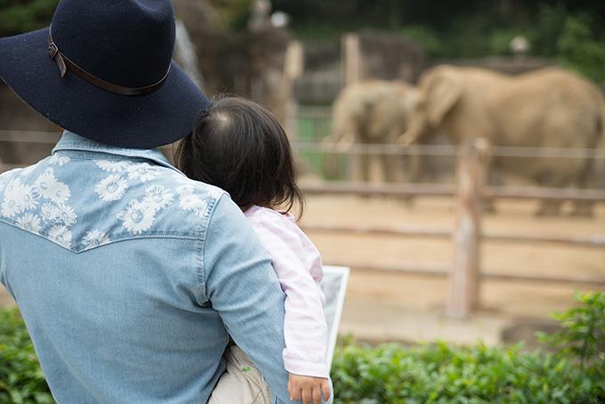 象を見ている親子