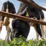 2才の娘と千葉のマザー牧場へ!アクアラインの渋滞でヘトヘト