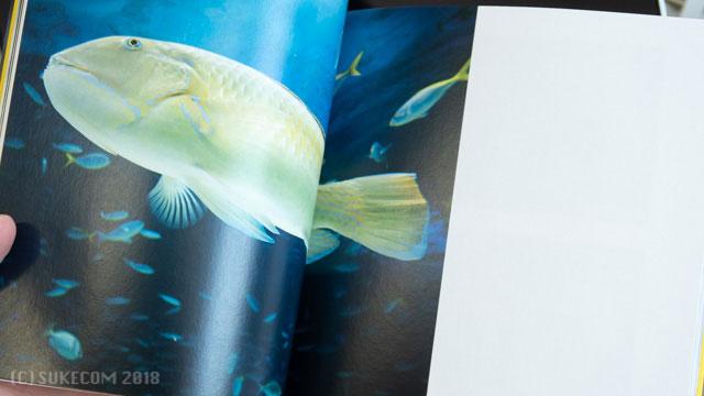 水族館で撮影した魚